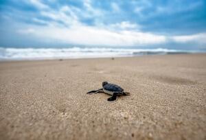 turtle-2201433__340