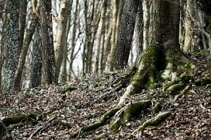 spring-forest-detail